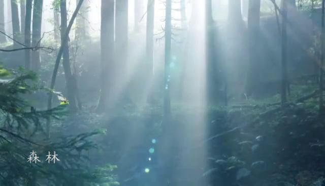 保护森林家园 防患于未燃